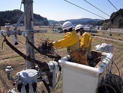 電柱上の巣を撤去する作業員