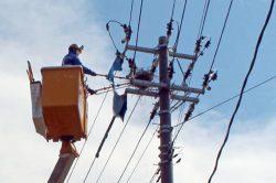 山形市で公開された間接活線工具によるカラスの営巣除去作業