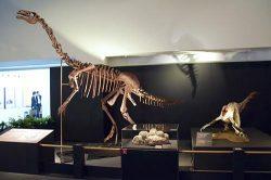 会場内には全身骨格など多くの標本が展示されている