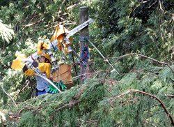 倒木が見つかった現場で復旧作業に当たる関西電力社員