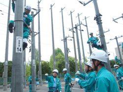 配電分野の同期社員に指示をもらいながら昇柱する送変電分野の新入社員(左)