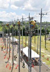 高さ12メートルの電柱最上部で作業に励む新入社員