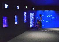 展示生物を引き立たせるため照明環境に工夫が凝らされている